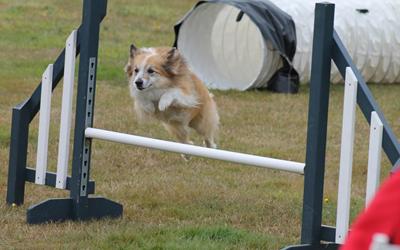 Flygande-hund.jpg