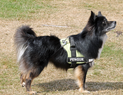 Frodurs-Fengur.JPG