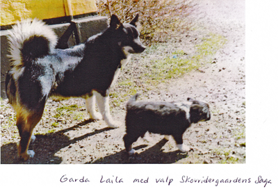 Garda-Laila-med-valp-Skovridergaadens-Saga.jpg