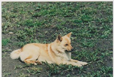 Sletta-S60812-87.jpg
