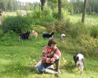 fria hundar