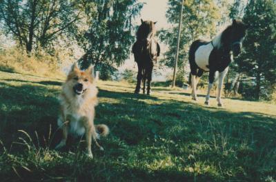 trausti n06064-83 m hästar